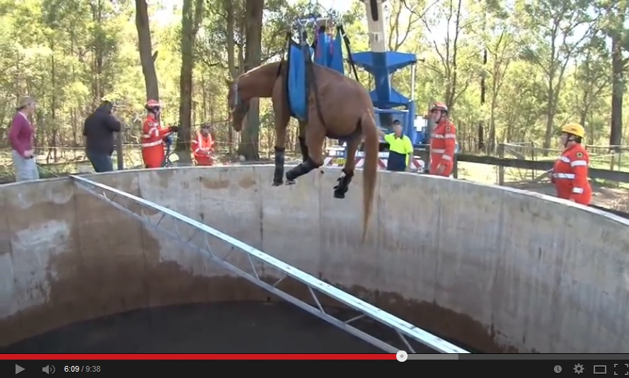 RAW footage of the horse rescue from the water tank.