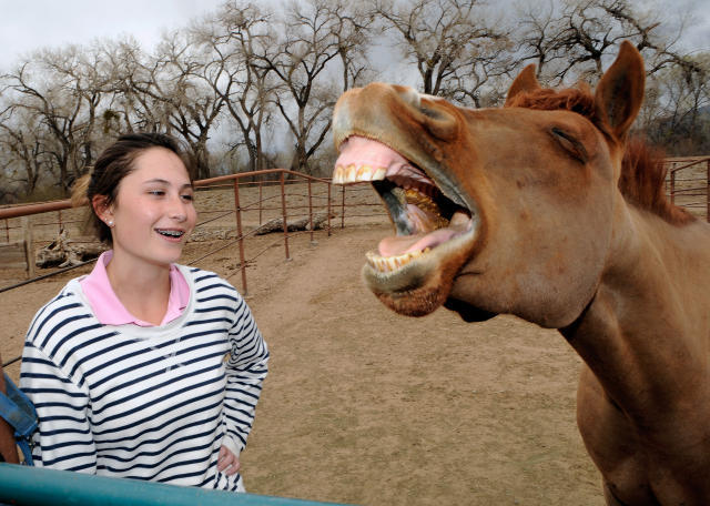 Saved from slaughter, pony jumps to fame