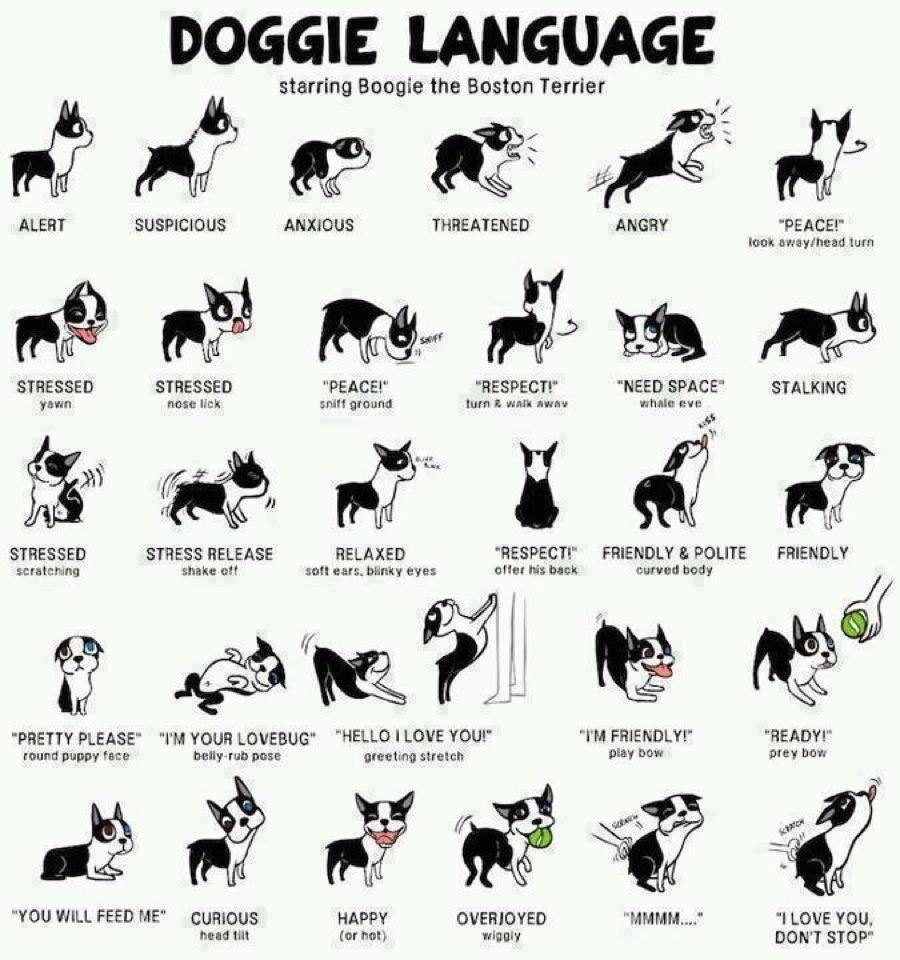 How To Read Your Dog's Body Language ?