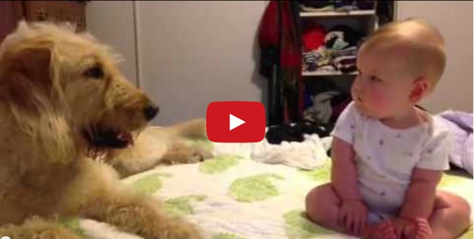 Watch, Melt Now! Baby Knocked Over By Dog Kisses