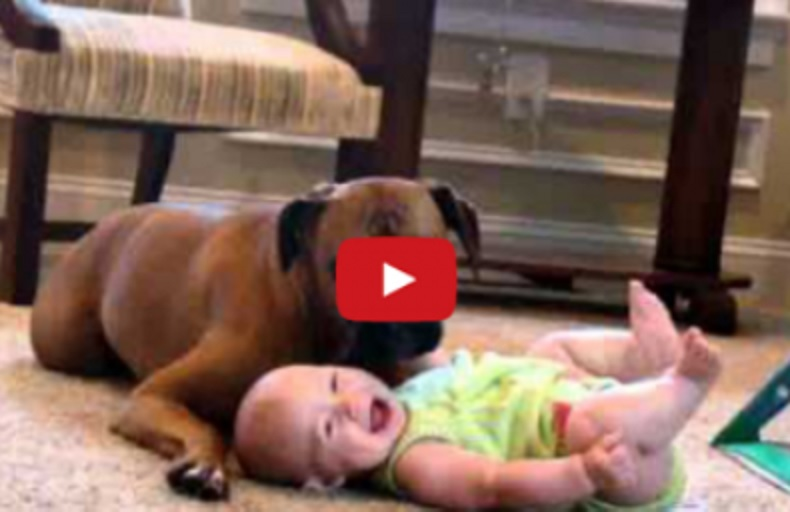 A Baby Was Left Alone With A Dog for One Minute…And This Happened
