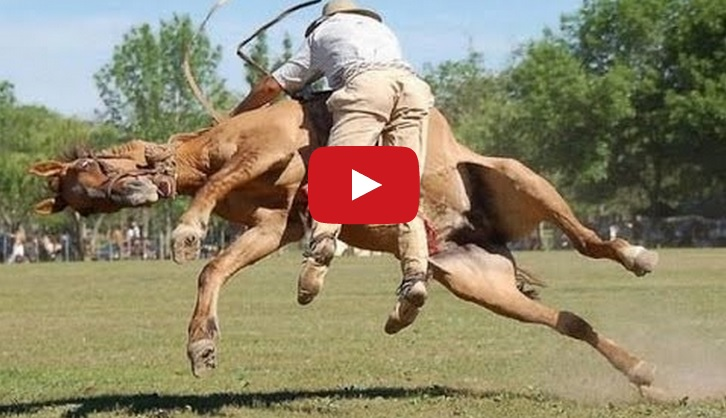 Best Funny Horse Videos Compilation 2014