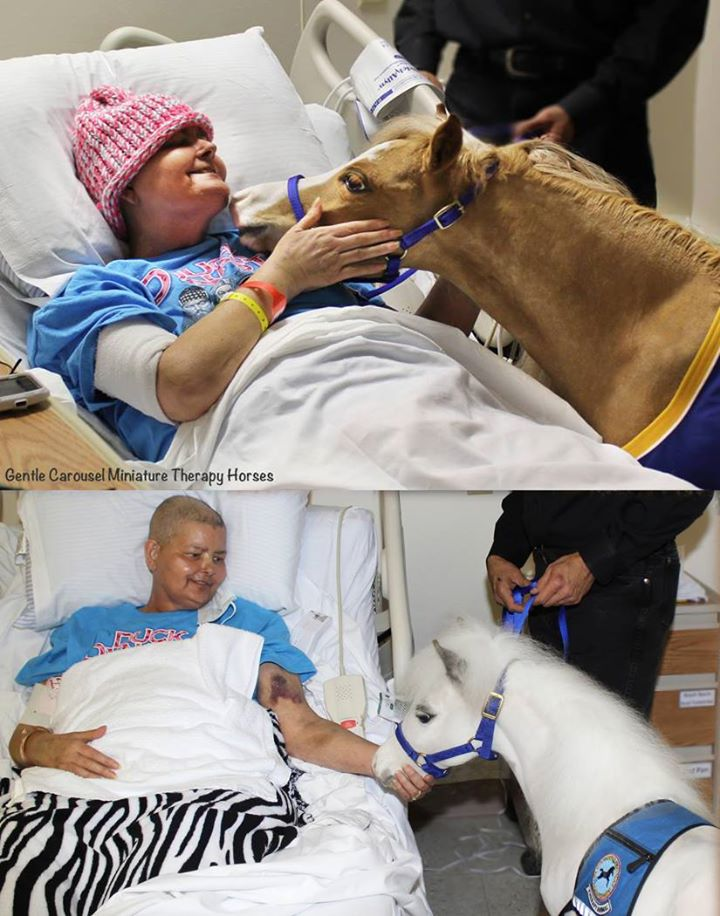 How you can help Gentle Carousel Miniature Therapy Horses ?