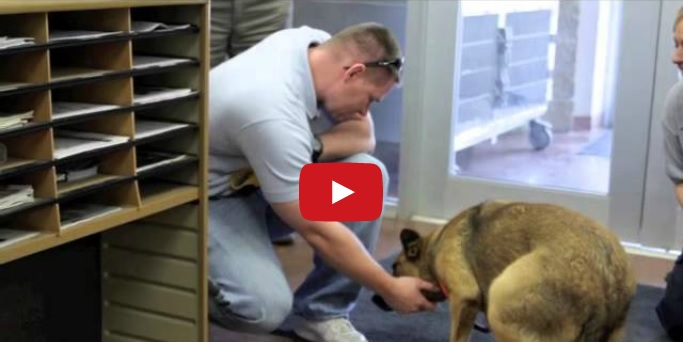 So Touching! You Have To See This Dog's Reaction To Being Rescued, I'm Almost In Tears!