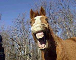 Funny-Horse-1-.jpg