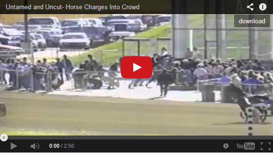 Untamed and Uncut- Horse Charges Into Crowd