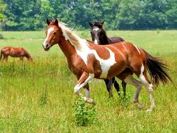 Beautiful horses <3