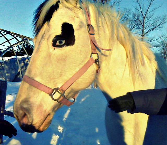 A pretty horse with blue eyes rounded by an awesome heart <3
