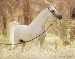 The most beautiful horses in the world!