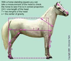 What are the basic horse gaits?