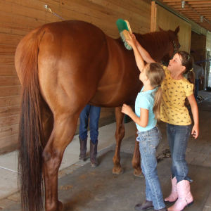 9 steps to take care of your horse