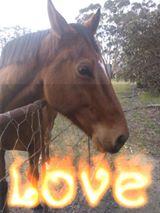 Abby's spectacular horse story!