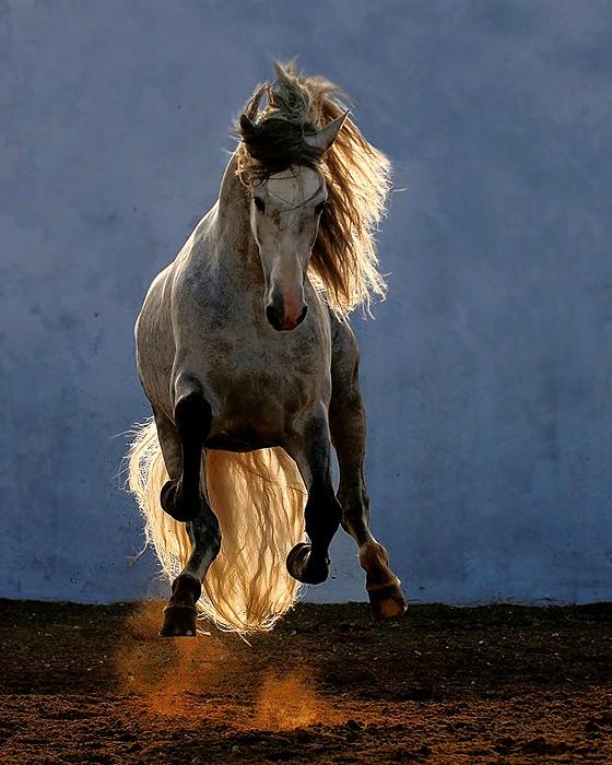 Majestic Beauty – 10 pics of Arabian and Andalusian Horses ...