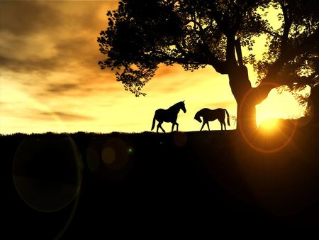 Horses with sunset