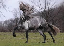 Beautiful horses images
