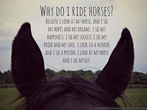 some of horses quotes pets