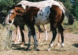 Strange horses colors!!