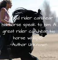 Some of horses quotes